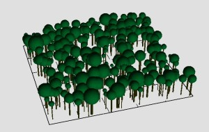 Visualisation of the forest model FORMIND for a monoculture