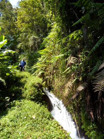 Tropical forests at Mt. Kilimanjaro