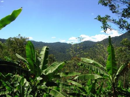 Tropical forest at RNI Betampona