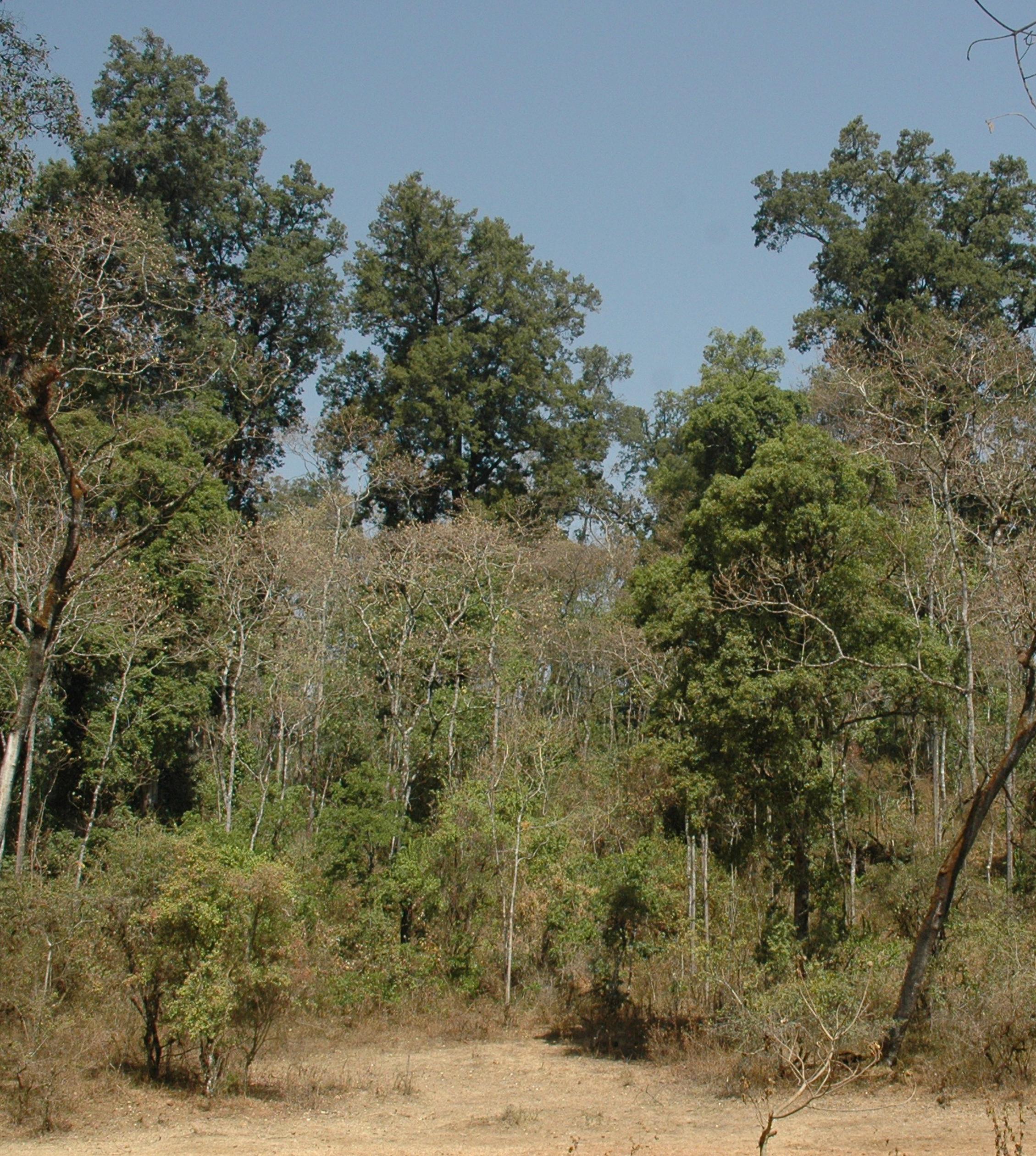 Munessa Forest